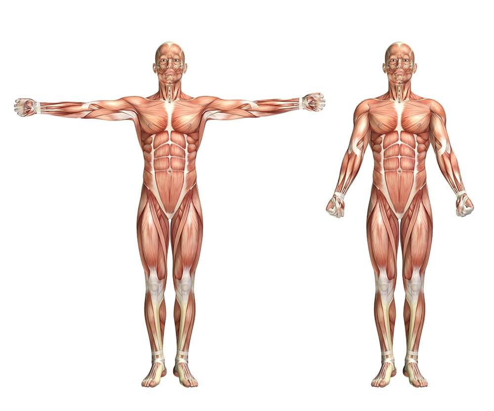 Eiwitten voor de opbouw van spieren
